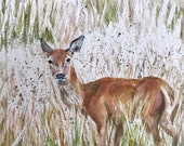 Giclee print of 'In the Long Grass'
