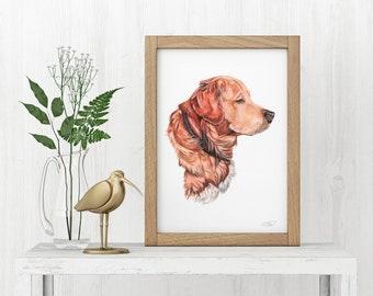 Golden retriever Art print, Dog Painting / Print / Dexter / Wall art