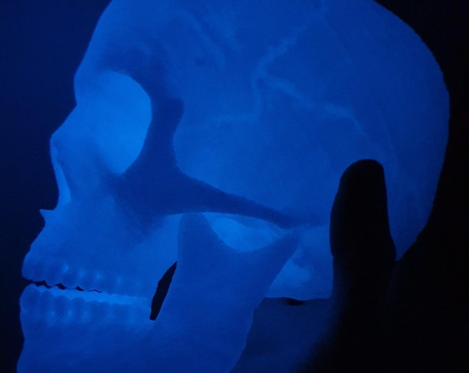Human skull glowing in the dark blue