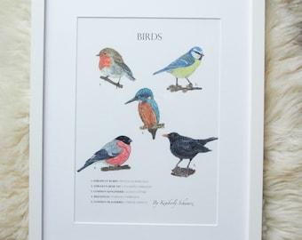 Birds Poster, Aquarell Illustration, Vögel, Wissenschaftliches Poster, Giclee, Kunstdruck, Gartenvögel