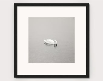 """Art photography """"SCHWAN""""- photo print unframed or canvas print, different sizes"""