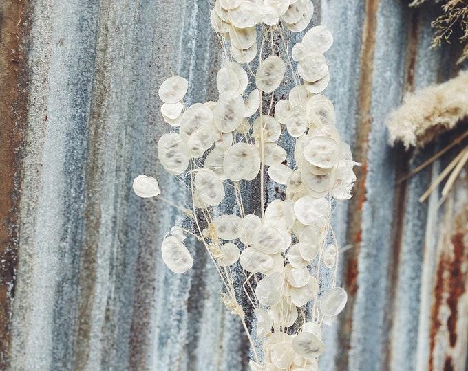 Honesty/Lunaria - Preserved Forever Flowers