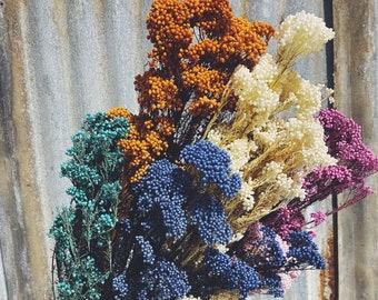 Rice Flower - Preserved Forever Flowers