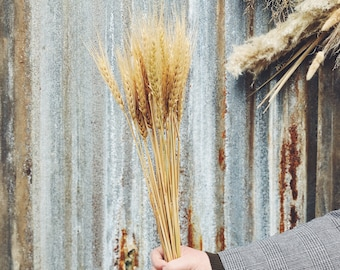Wheat - Preserved Forever Flowers