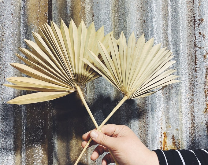 Sun Palms - Preserved Forever Flowers