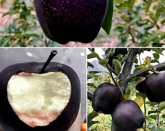 Rare 30 Black Diamond Apple Seeds Heirloom Exotic Garden Fruit Rare Unusual Plant Seed
