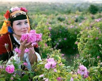 Rose Otto-Bulgaria, Pure Rose Oil (10% Diluted); Rosa Damascena -Therapeutic, Nourish & Balance -Aromatherapy, Natural Skincare, Perfume