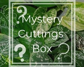 Mystery Cuttings Box Lucky Dip, Rooted Cuttings Indoor Plants, House Plants Surprise Plant Gift Ideas