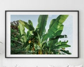 Banana leaf print, Printable Wall Art, leaf print, palm leaf, banana leaf poster, botanical print, palm print, banana leaves, palm leaves