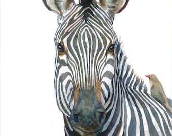 Zebra and Oxpecker Watercolor Portrait Print - 11x14