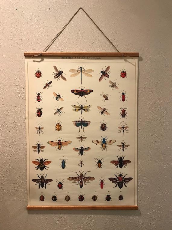 Histories Naturelle, Insectes Wall Art