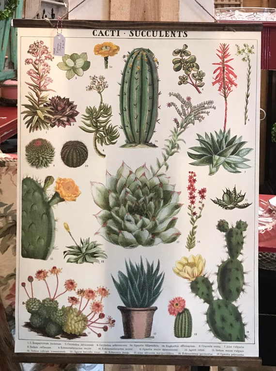 Handmade Cacti - Succulents Wall Hanging