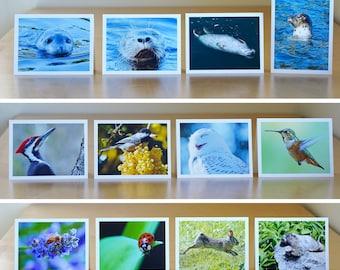 Wildlife Cards 4-Pack