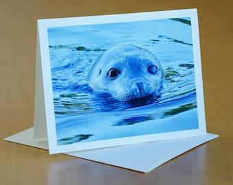 Seal Peeking Card