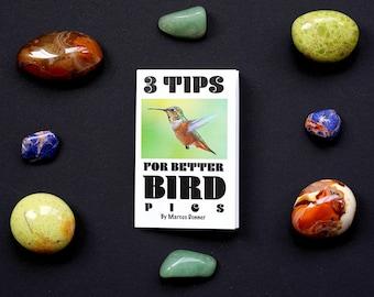 3 Tips for Better Bird Pics