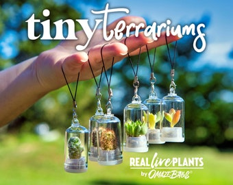 Tiny Terrarium Real Live Pet Plant! - Cactus - Succulent - Miniature Key Chain - Necklace - Mother's Day Gift - Fairy Garden - Mini Plant
