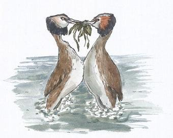 Grebes watercolour print postcard
