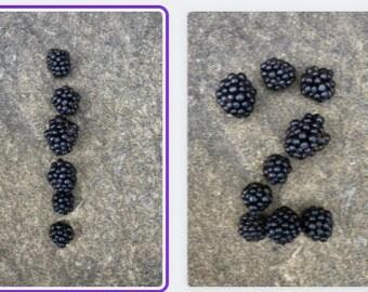 Blackberry Number Cards