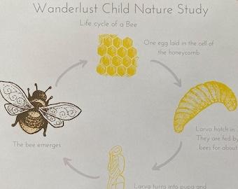Digital Download: Bees