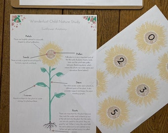 PDF Download: Sunflowers and Summer Flowers