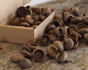 Small Acorn Caps For Your Crafts and Home Decor, Organic Dried Red Oak Acorn Caps 100 pcs