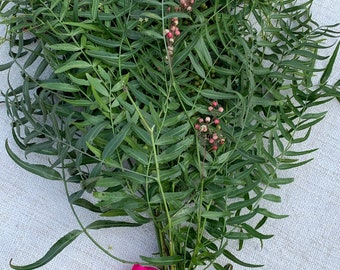 Fresh cut pepperberry branches - big bundle of wonderful greenery for home decor!  Schinus molle pepperwood