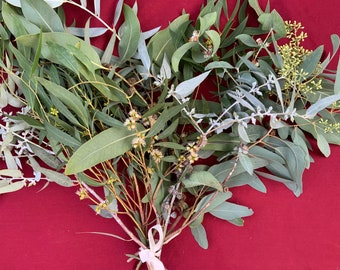 Eucalyptus lovers FRESH  bouquet -  big and beautiful!  10 stems, mixed species, long-lasting and fragrant!