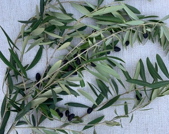 Large bundle of fresh olive branches - 6 to 8 approx. 20-inch stems, freshly cut!  Perfect for wedding, event planning, elegant centerpiece