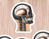 Medical Head #3 Sticker Set | 4 Vinyl Color Vintage Human Anatomy Stickers | Antique Anatomical Edwardian Skull