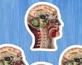 Medical Head #4 Sticker Set | 4 Vinyl Color Vintage Human Anatomy Stickers | Antique Anatomical Edwardian for Laptop, Water Bottle Etc