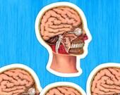 Medical Head #10 Sticker Set | 4 Vinyl Color Vintage Human Anatomy Stickers | Antique Anatomical Edwardian for Laptop, Etc