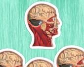 Medical Head #2 Sticker Set | 4 Vinyl Color Vintage Human Anatomy Stickers | Antique Anatomical Edwardian for Laptop, Water Bottle Etc
