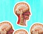 Medical Head #9 Sticker Set | 4 Vinyl Color Vintage Human Anatomy Stickers | Antique Anatomical Edwardian sagittal view
