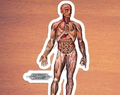 Viscera in Position Large Human Anatomy Vinyl Sticker | Vintage Victorian Anatomical | Retro Medical, Small Gift