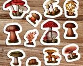 Poisonous Fungi & Mushrooms Vinyl Sticker Set | 12 Edwardian Botanical Stickers, Fungus Decal, Retro Mushroom, Small Gift
