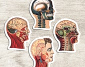 Medical Heads Variety #2 Sticker Set | 4 Vinyl Color Vintage Human Anatomy Stickers | Antique Anatomical Edwardian, Small Gift