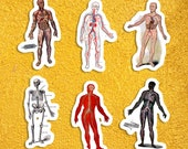 Human Anatomy Full Body Models Sticker Set #1 | 6 Vinyl Anatomical Stickers: Victorian Edwardian 1920s Decals, Small Gift