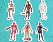 Human Anatomy Full Body Models Sticker Set #2 | 6 Vinyl Anatomical Stickers: Victorian Edwardian 1920s Decals, Small Gift