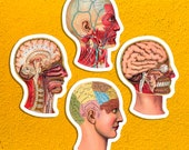Medical Heads Variety #1 Sticker Set | 4 Vinyl Color Vintage Human Anatomy Stickers | Victorian Anatomical, Small Gift