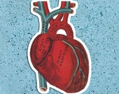Anatomical Heart Vinyl Sticker | Vintage Victorian Large Human Heart Anatomy | Antique Medical Love Science, Small Gift