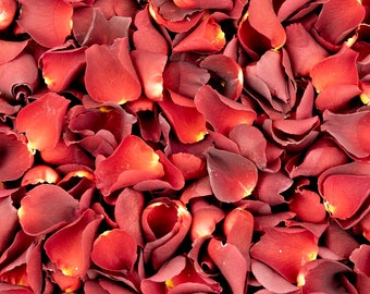 Table Decor Luxury Cream Rose Petals Aisle Runners Biodegradable Freeze Dried Petals Valentines Day Throwing Confetti Proposals