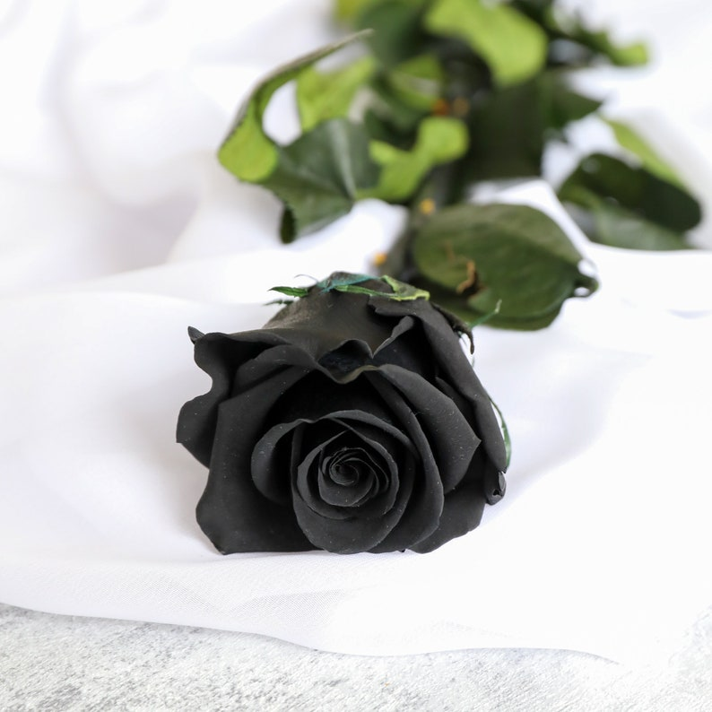 Luxury Preserved Single Black Rose in a Gift Box Infinity