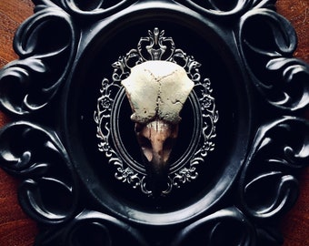 Raven Skull Framed Faux Taxidermy Wall Art Decor   Goth Decor   Halloween   Macabre Art   Faux Skulls   Oddities   Crow   Gothic Wall Art