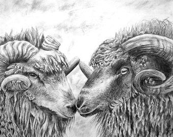 Sheep, original animal square drawing, countryside art