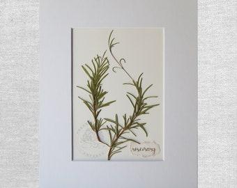 REAL Rosemary Herb-culinary art,-kitchen décor-botanical herb art-wall art-herb garden-hostess gift