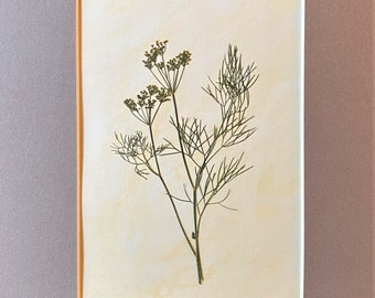 Culinary Art-Dill, Real Herbs, Kitchen Décor, Garden Herb, Botanical Décor Foodie Gift, Hostess Gift,