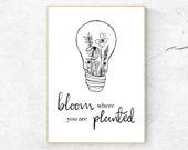 Bloom Where You Are Planted Print - Lightbulb Botantical Art Poster
