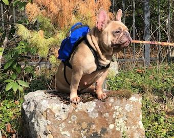 Blue Dog Backpack