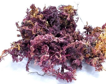 Wildcrafted Jamaican Purple Sea Moss