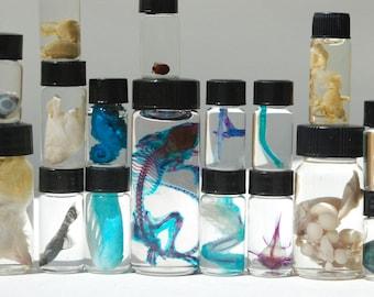 Mystery Oddity WET SPECIMEN Surprise Box - Animal Kingdom